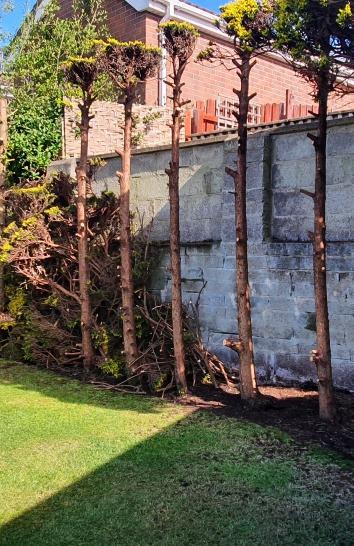 tree works, stump grinding, tree felling, height reductions, pollarding, tree shaping, hedge removal, hedge reductions. carrickfergus, newtownabbey